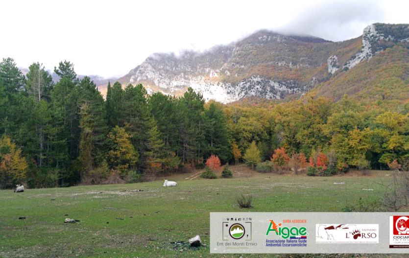 Trisulti e Colle del Vomero – Sentieri olistici