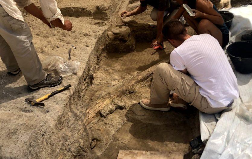 Resti di un pachiderma vissuto 400.000 anni fa